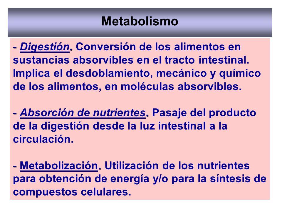 Metabolismo -. - Digestión. Conversión de los alimentos en sustancias absorvibles en el tracto intestinal. Implica el desdoblamiento, mecánico y quími
