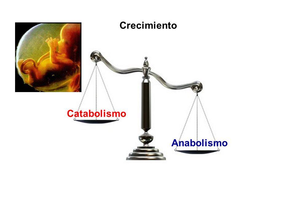 Anabolismo Catabolismo Crecimiento