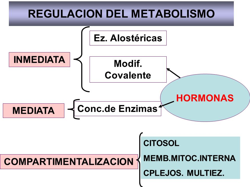 REGULACION DEL METABOLISMO INMEDIATA MEDIATA Ez. Alostéricas Modif. Covalente Conc.de Enzimas HORMONAS COMPARTIMENTALIZACION CITOSOL MEMB.MITOC.INTERN
