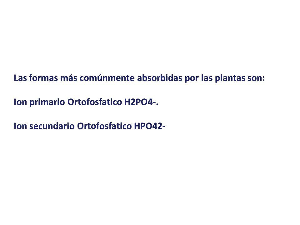 Las formas más comúnmente absorbidas por las plantas son: Ion primario Ortofosfatico H2PO4-. Ion secundario Ortofosfatico HPO42- Las formas más comúnm
