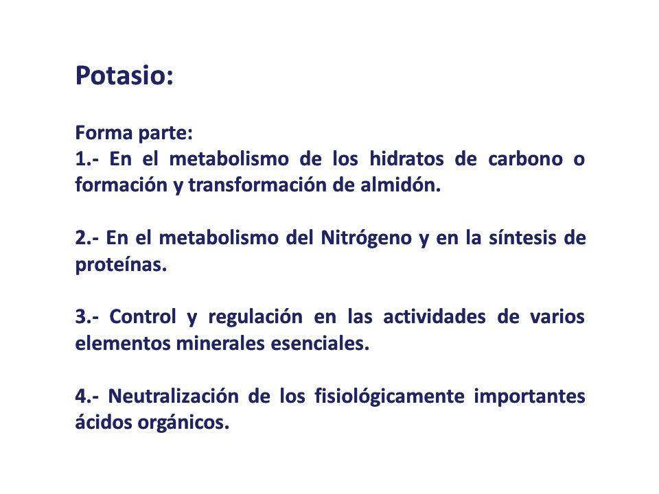 Potasio: Forma parte: 1.- En el metabolismo de los hidratos de carbono o formación y transformación de almidón. 2.- En el metabolismo del Nitrógeno y