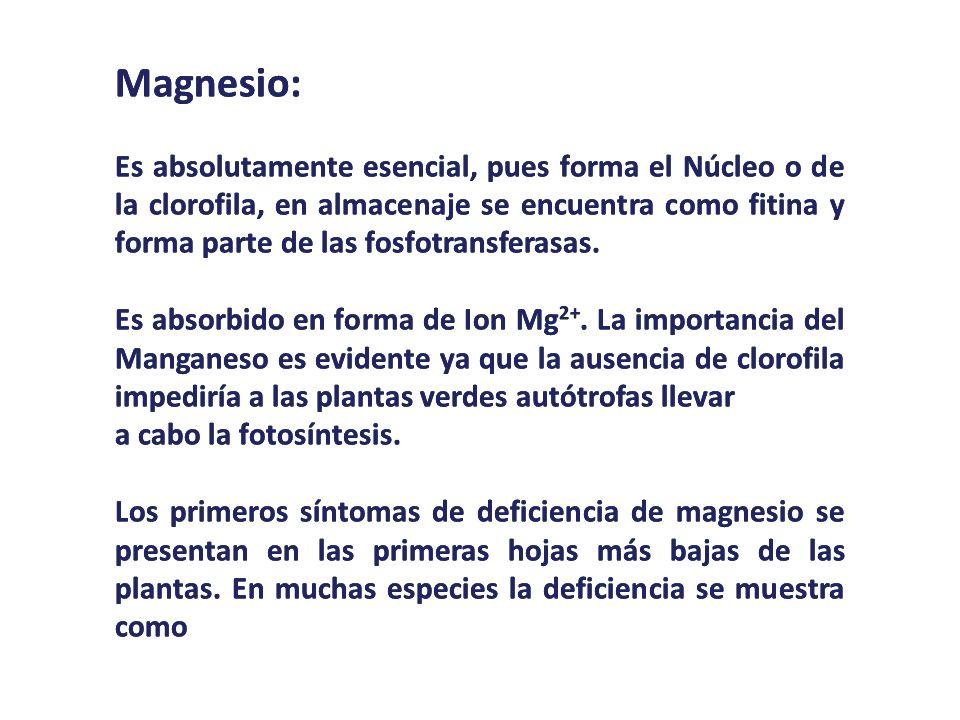 Magnesio: Es absolutamente esencial, pues forma el Núcleo o de la clorofila, en almacenaje se encuentra como fitina y forma parte de las fosfotransfer