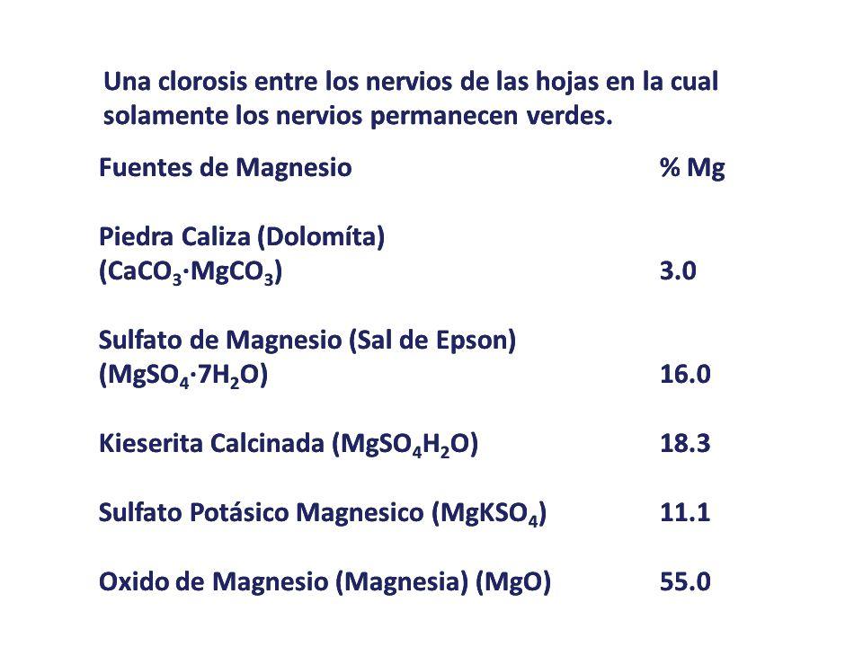 Una clorosis entre los nervios de las hojas en la cual solamente los nervios permanecen verdes. Fuentes de Magnesio% Mg Piedra Caliza (Dolomíta) (CaCO