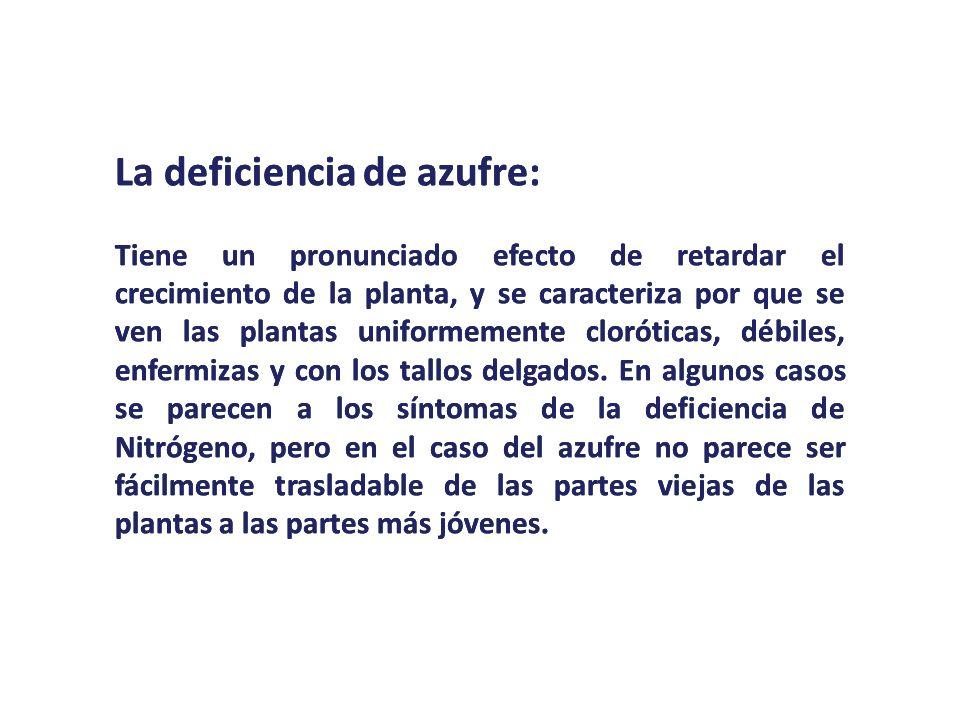 La deficiencia de azufre: Tiene un pronunciado efecto de retardar el crecimiento de la planta, y se caracteriza por que se ven las plantas uniformemen