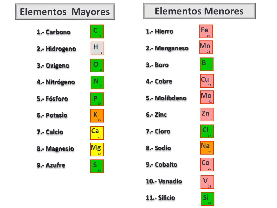 Elementos Mayores 1.- Carbono 2.- Hidrogeno 3.- Oxigeno 4.- Nitrógeno 5.- Fósforo 6.- Potasio 7.- Calcio 8.- Magnesio 9.- Azufre 1.- Carbono 2.- Hidro