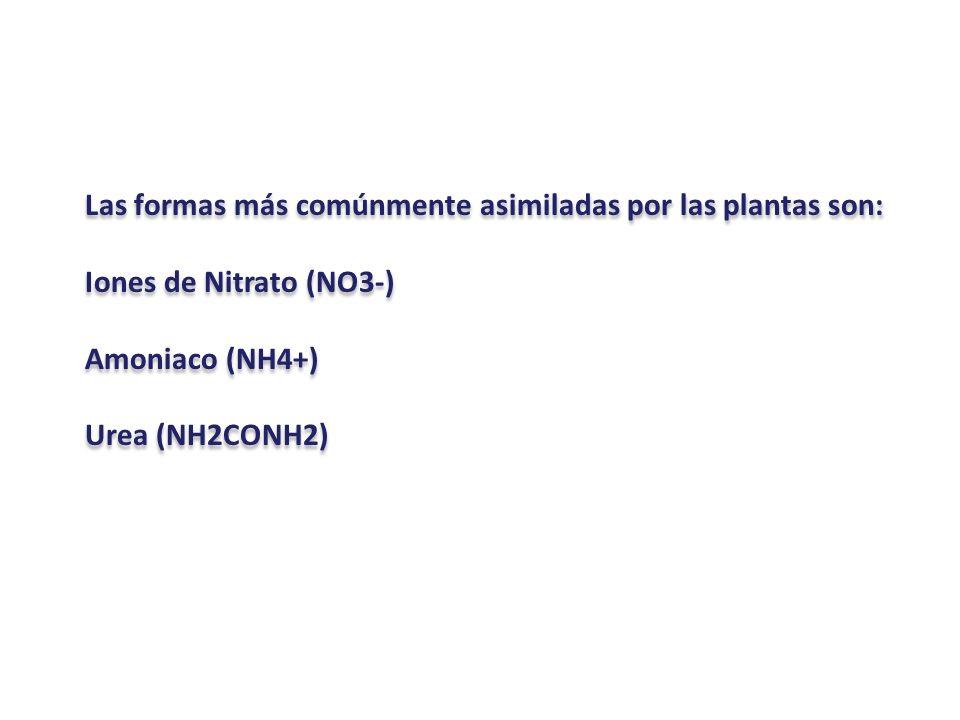 Las formas más comúnmente asimiladas por las plantas son: Iones de Nitrato (NO3-) Amoniaco (NH4+) Urea (NH2CONH2) Las formas más comúnmente asimiladas