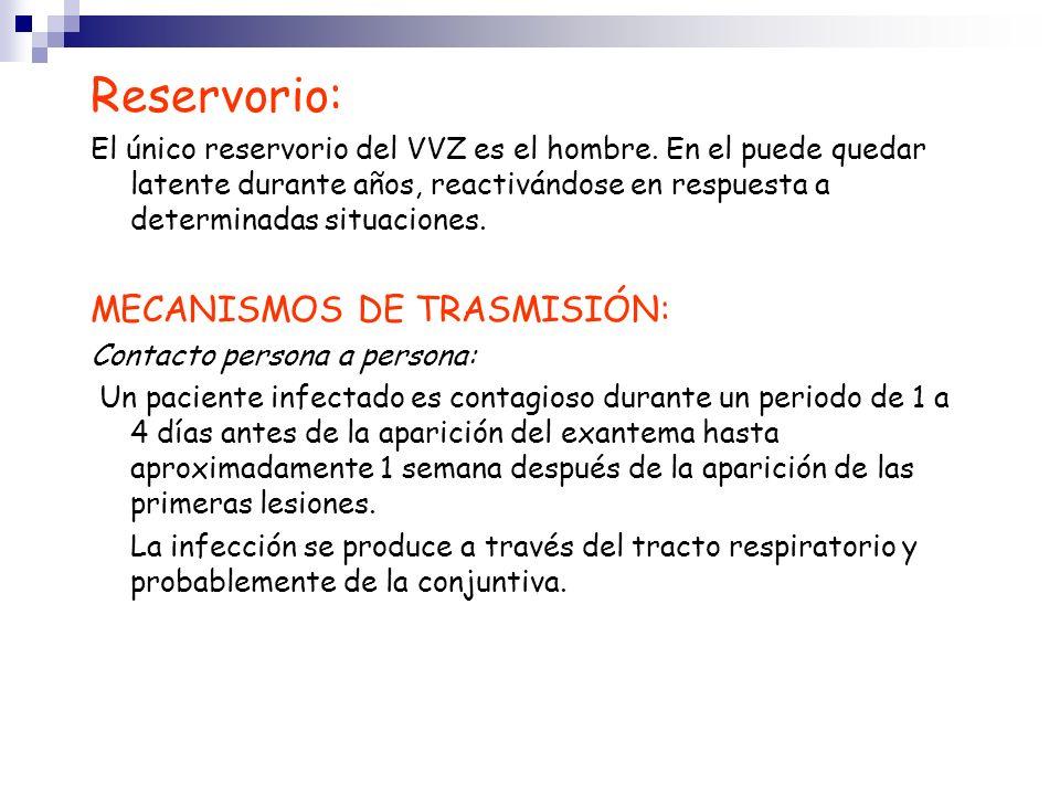 Reservorio: El único reservorio del VVZ es el hombre. En el puede quedar latente durante años, reactivándose en respuesta a determinadas situaciones.