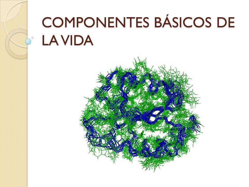 Función estructural: Forman parte de diversas estructuras biológicas (paredes celulares de plantas y hongos, exoesqueleto de artrópodos).