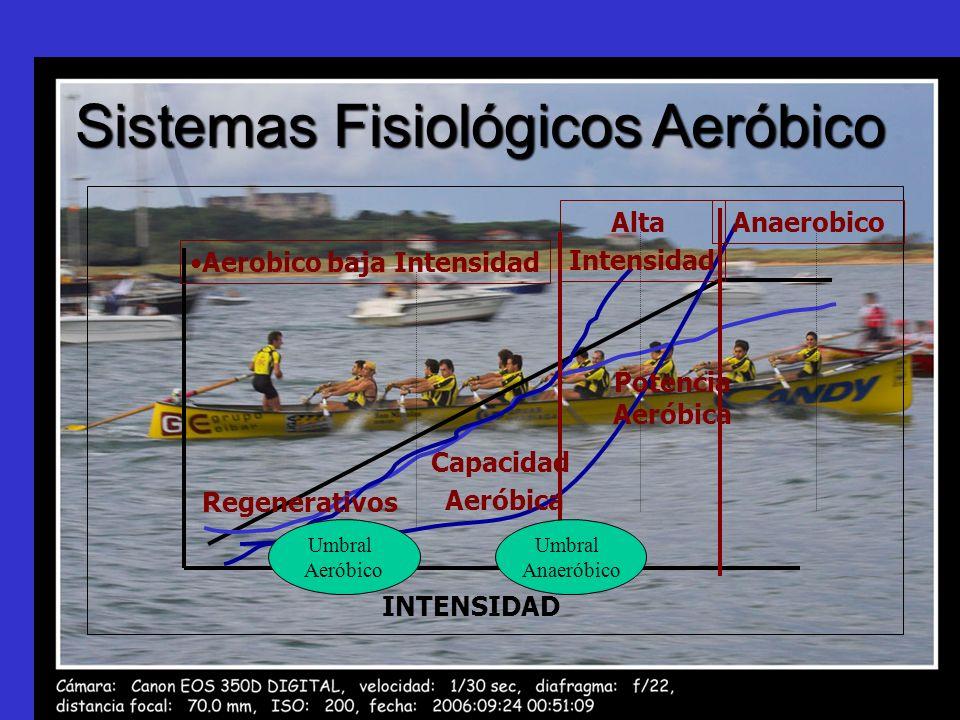 Sistemas Fisiológicos Aeróbico INTENSIDAD Aerobico baja Intensidad Alta Intensidad Anaerobico Capacidad Aeróbica Potencia Aeróbica Regenerativos Umbra