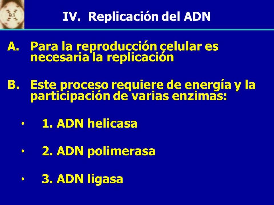 IV. Replicación del ADN A. A.Para la reproducción celular es necesaria la replicación B. B.Este proceso requiere de energía y la participación de vari