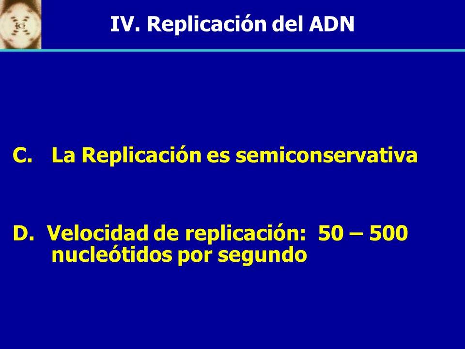 IV. Replicación del ADN C. C.La Replicación es semiconservativa D. Velocidad de replicación: 50 – 500 nucleótidos por segundo