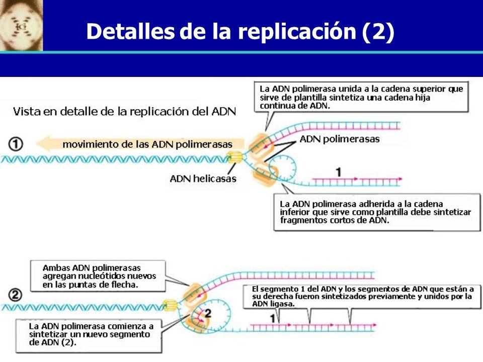 Detalles de la replicación (2)