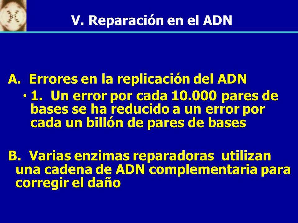 A. Errores en la replicación del ADN 1. Un error por cada 10.000 pares de bases se ha reducido a un error por cada un billón de pares de bases B. Vari