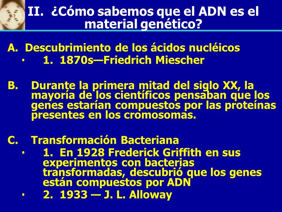 II. ¿Cómo sabemos que el ADN es el material genético? A. Descubrimiento de los ácidos nucléicos 1. 1870sFriedrich Miescher B. B.Durante la primera mit