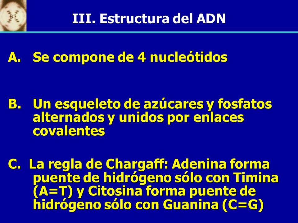 III. Estructura del ADN A.Se compone de 4 nucleótidos B.Un esqueleto de azúcares y fosfatos alternados y unidos por enlaces covalentes C. La regla de