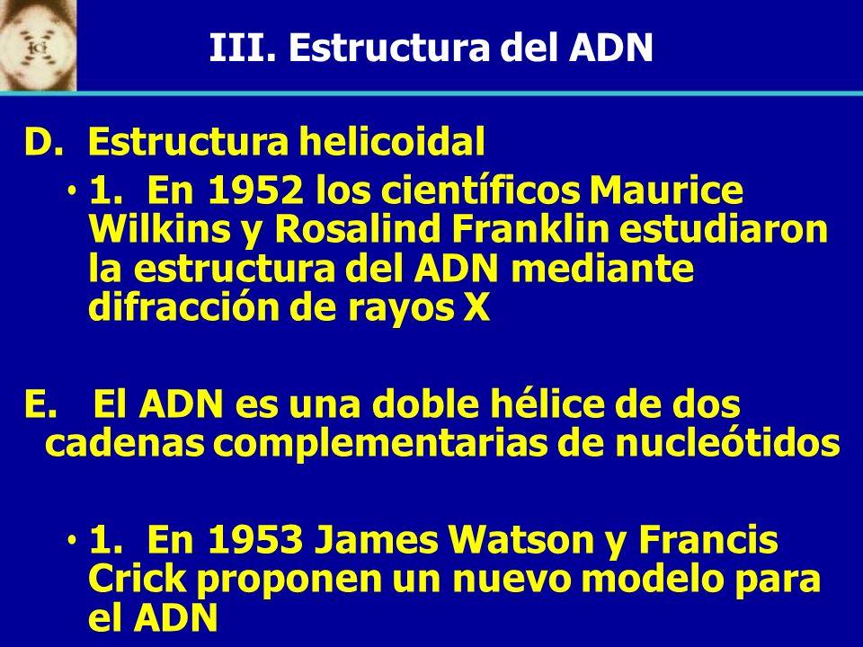 III. Estructura del ADN D. Estructura helicoidal 1. En 1952 los científicos Maurice Wilkins y Rosalind Franklin estudiaron la estructura del ADN media