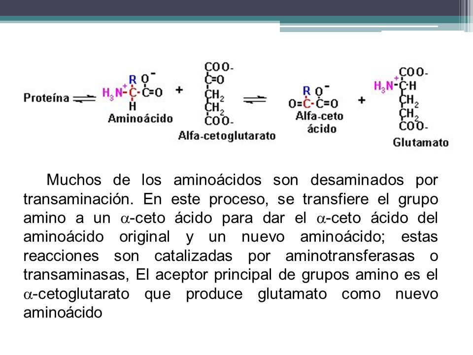 Muchos de los aminoácidos son desaminados por transaminación. En este proceso, se transfiere el grupo amino a un -ceto ácido para dar el -ceto ácido d