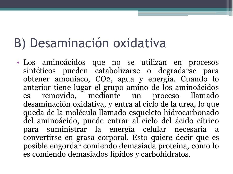 B) Desaminación oxidativa Los aminoácidos que no se utilizan en procesos sintéticos pueden catabolizarse o degradarse para obtener amoníaco, CO2, agua