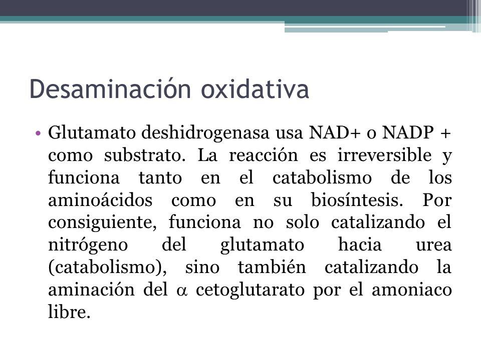 Desaminación oxidativa Glutamato deshidrogenasa usa NAD+ o NADP + como substrato. La reacción es irreversible y funciona tanto en el catabolismo de lo