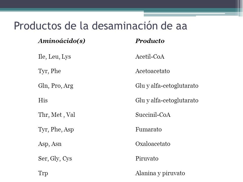 Productos de la desaminación de aa Aminoácido(s) Producto Ile, Leu, Lys Acetil-CoA Tyr, Phe Acetoacetato Gln, Pro, Arg Glu y alfa-cetoglutarato His Gl