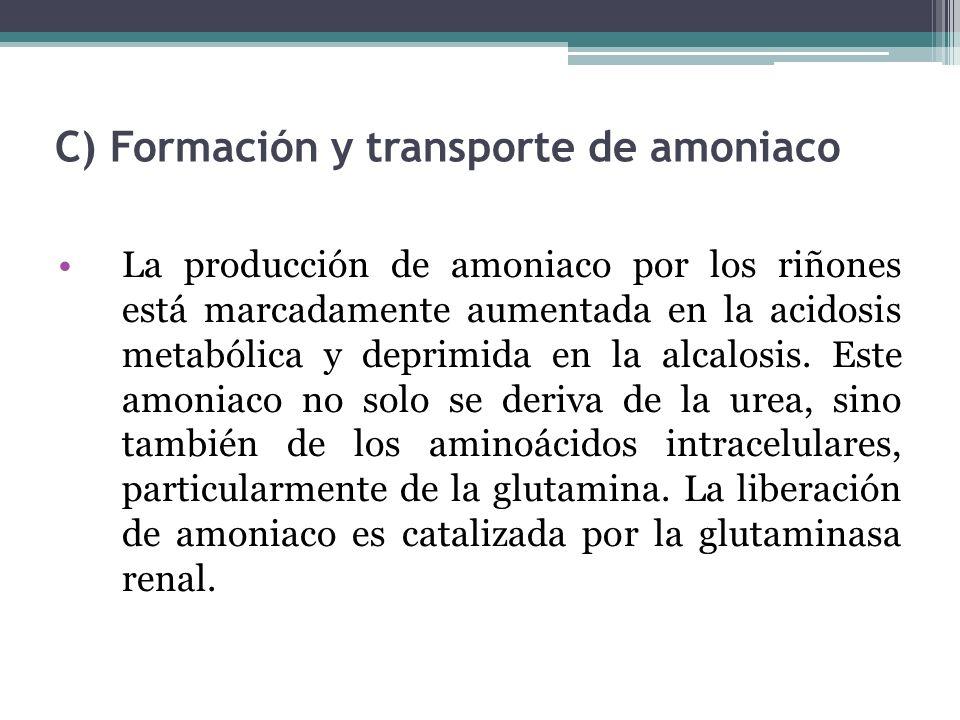 C) Formación y transporte de amoniaco La producción de amoniaco por los riñones está marcadamente aumentada en la acidosis metabólica y deprimida en l