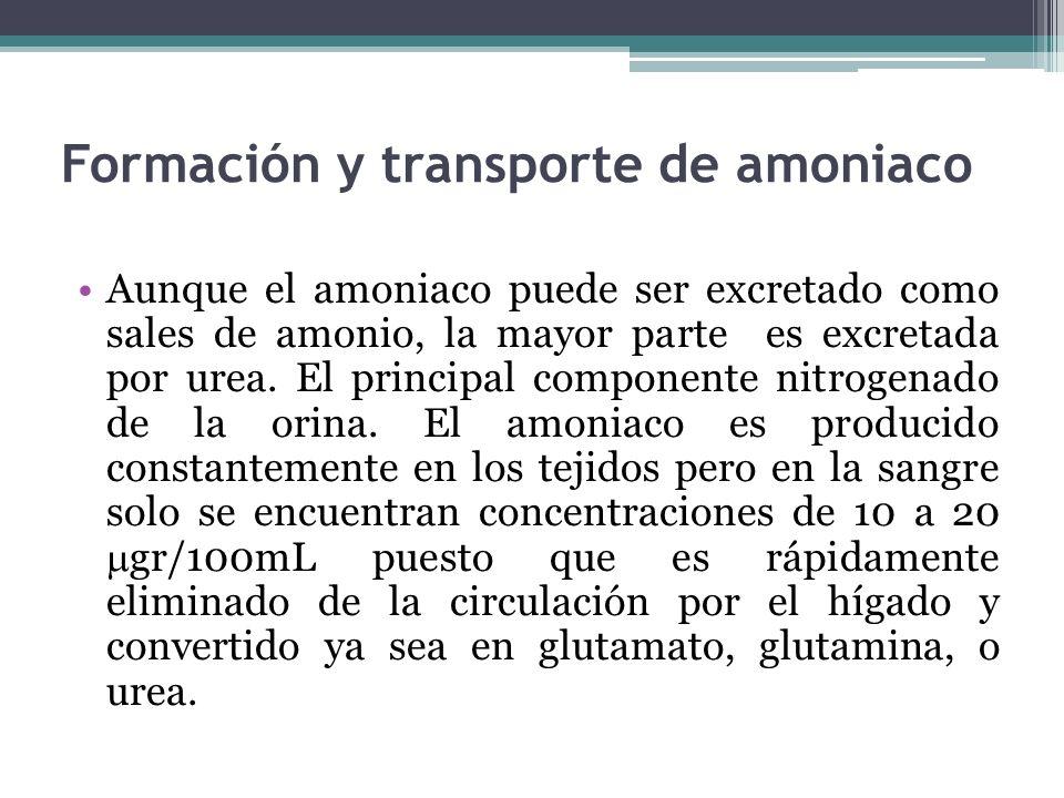 Formación y transporte de amoniaco Aunque el amoniaco puede ser excretado como sales de amonio, la mayor parte es excretada por urea. El principal com