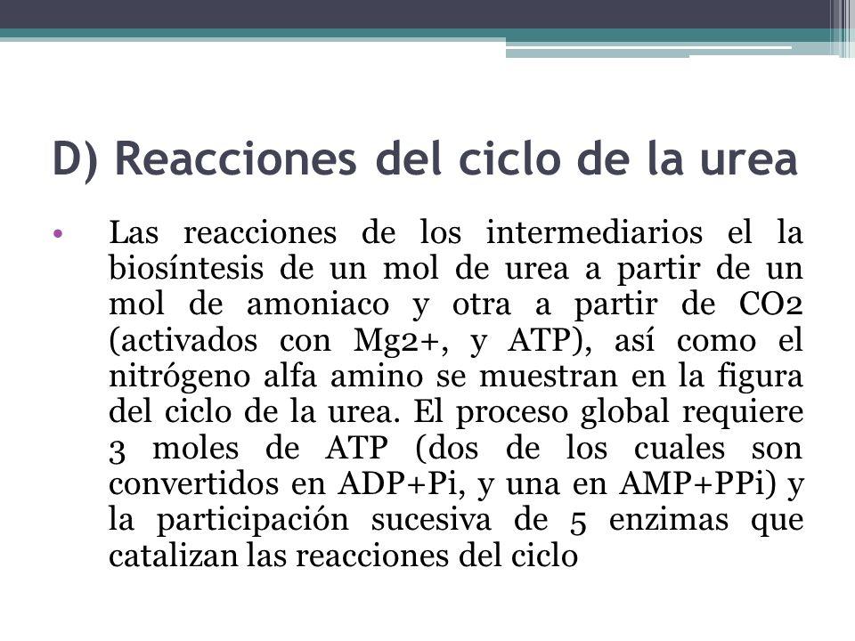 D) Reacciones del ciclo de la urea Las reacciones de los intermediarios el la biosíntesis de un mol de urea a partir de un mol de amoniaco y otra a pa