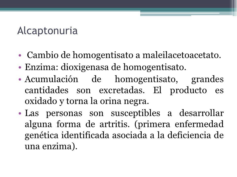 Alcaptonuria Cambio de homogentisato a maleilacetoacetato. Enzima: dioxigenasa de homogentisato. Acumulación de homogentisato, grandes cantidades son