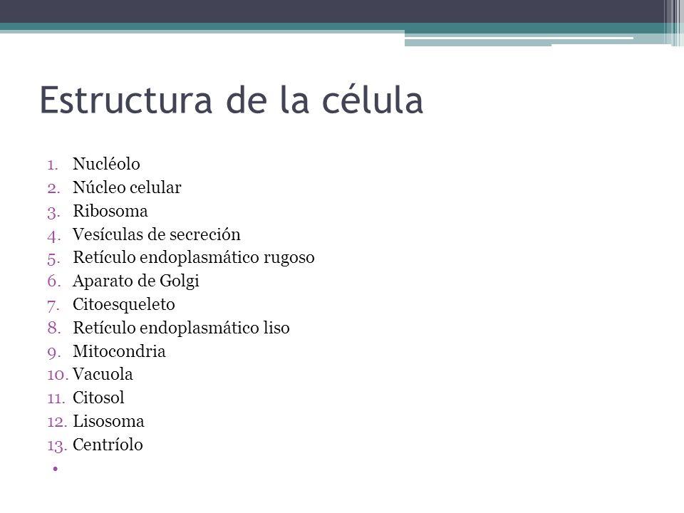 Estructura de la célula 1.Nucléolo 2.Núcleo celular 3.Ribosoma 4.Vesículas de secreción 5.Retículo endoplasmático rugoso 6.Aparato de Golgi 7.Citoesqu