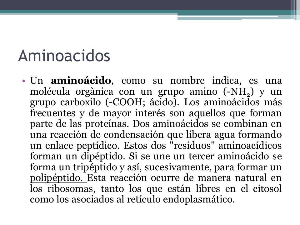 Aminoacidos Un aminoácido, como su nombre indica, es una molécula orgànica con un grupo amino (-NH 2 ) y un grupo carboxilo (-COOH; ácido). Los aminoá
