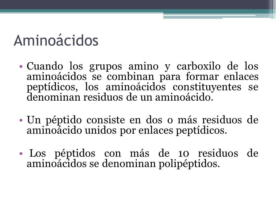 Aminoácidos Cuando los grupos amino y carboxilo de los aminoácidos se combinan para formar enlaces peptídicos, los aminoácidos constituyentes se denom