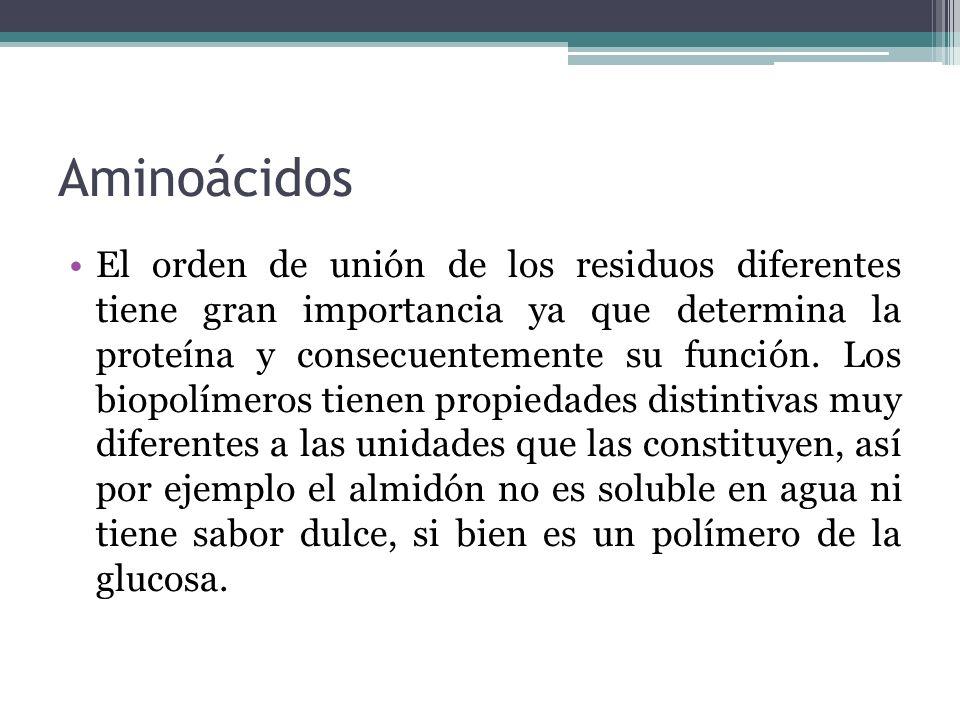 Aminoácidos El orden de unión de los residuos diferentes tiene gran importancia ya que determina la proteína y consecuentemente su función. Los biopol