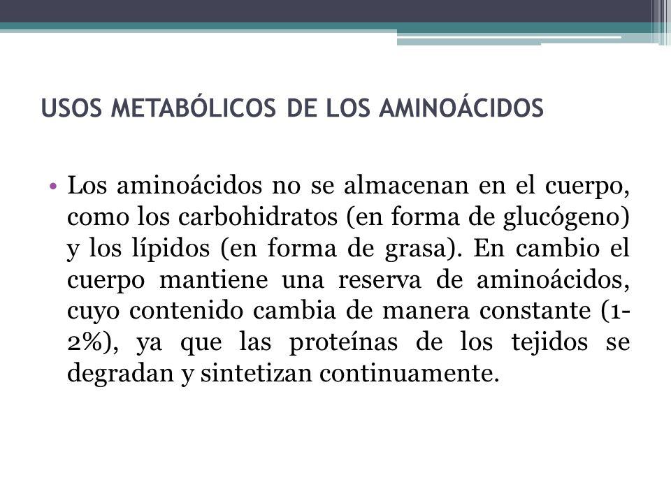 USOS METABÓLICOS DE LOS AMINOÁCIDOS Los aminoácidos no se almacenan en el cuerpo, como los carbohidratos (en forma de glucógeno) y los lípidos (en for