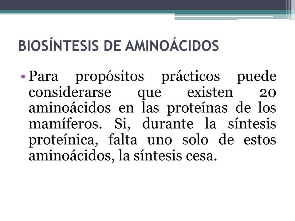BIOSÍNTESIS DE AMINOÁCIDOS Para propósitos prácticos puede considerarse que existen 20 aminoácidos en las proteínas de los mamíferos. Si, durante la s