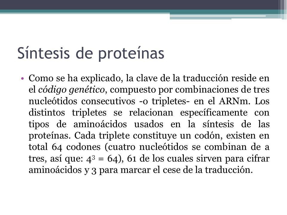 Síntesis de proteínas Como se ha explicado, la clave de la traducción reside en el código genético, compuesto por combinaciones de tres nucleótidos co