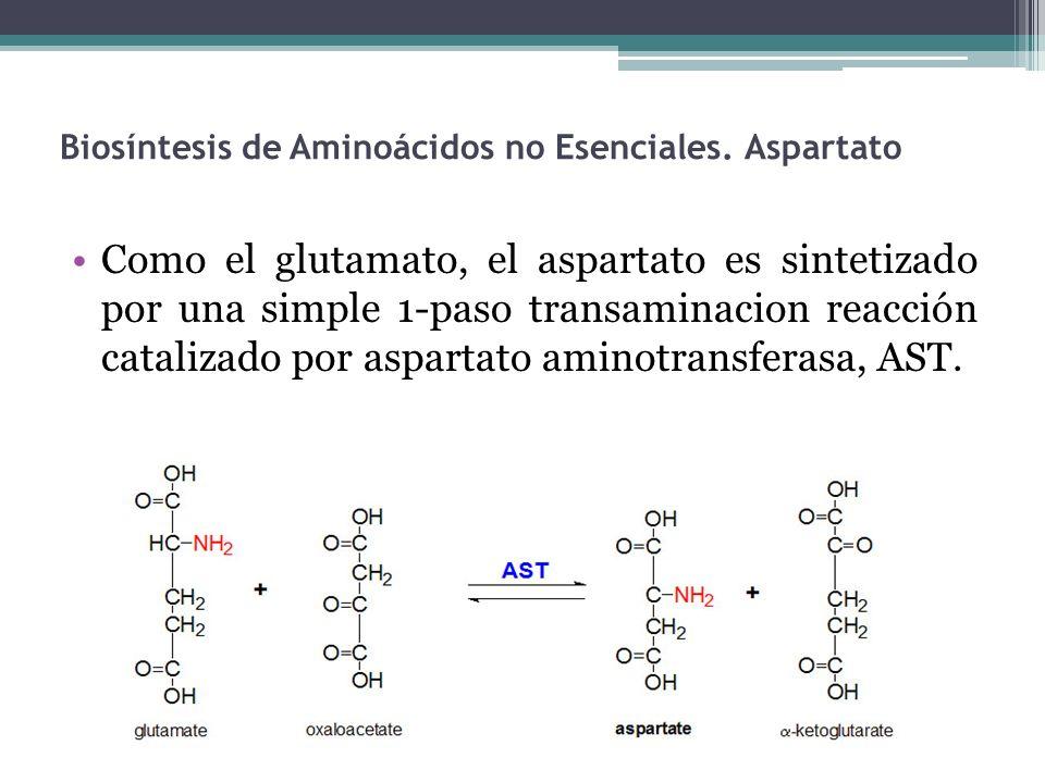Biosíntesis de Aminoácidos no Esenciales. Aspartato Como el glutamato, el aspartato es sintetizado por una simple 1-paso transaminacion reacción catal