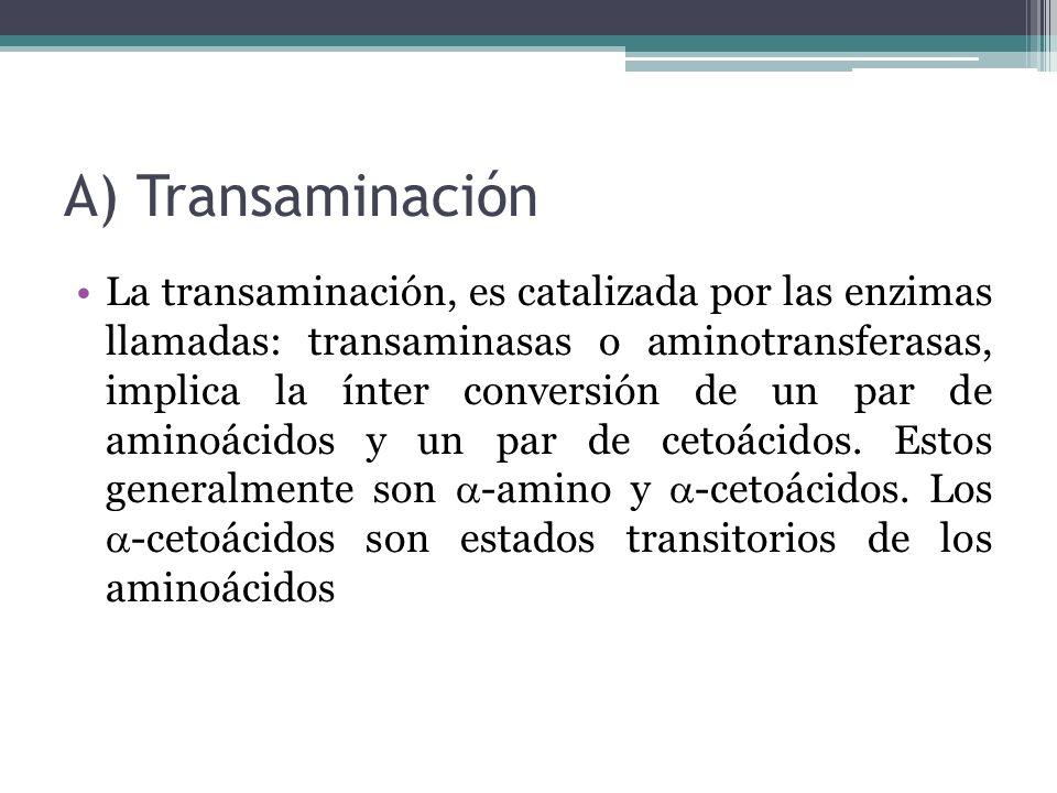 A) Transaminación La transaminación, es catalizada por las enzimas llamadas: transaminasas o aminotransferasas, implica la ínter conversión de un par