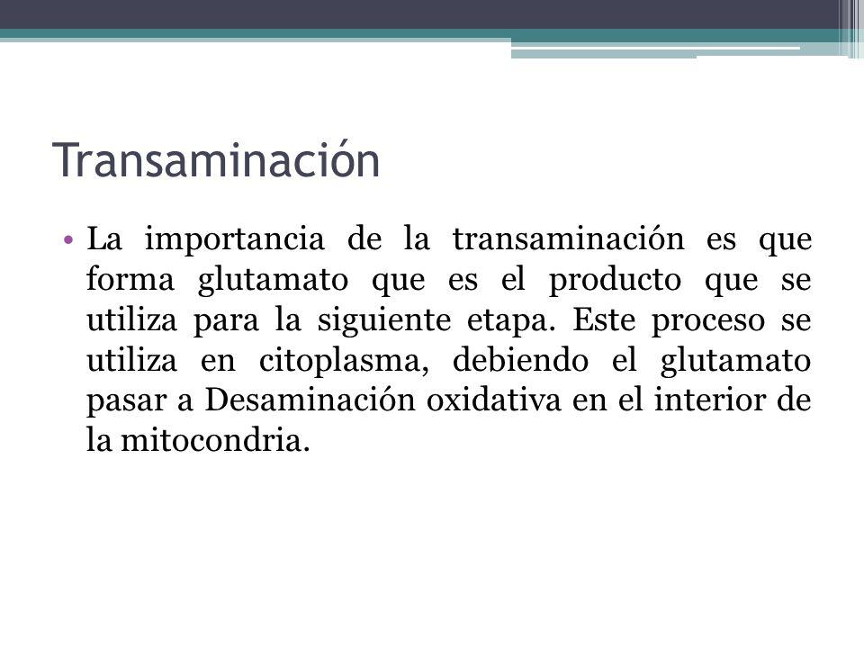 Transaminación La importancia de la transaminación es que forma glutamato que es el producto que se utiliza para la siguiente etapa. Este proceso se u