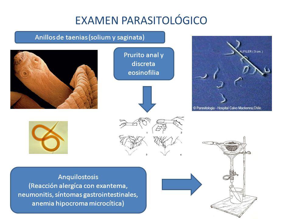 EXAMEN PARASITOLÓGICO Anillos de taenias (solium y saginata) Prurito anal y discreta eosinofilia Anquilostosis (Reacción alergíca con exantema, neumon
