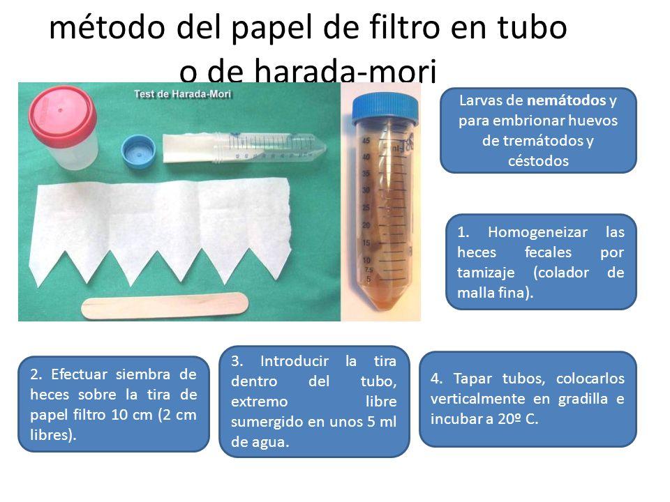 método del papel de filtro en tubo o de harada-mori Larvas de nemátodos y para embrionar huevos de tremátodos y céstodos 1. Homogeneizar las heces fec