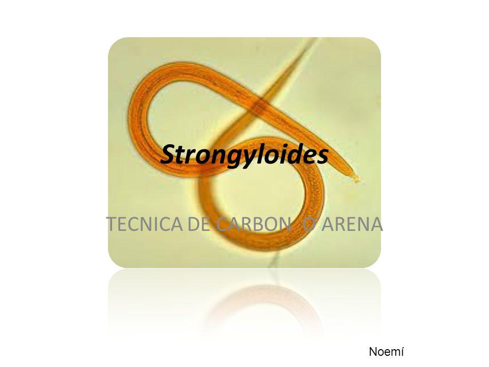 Strongyloides TECNICA DE CARBON O ARENA Noemí