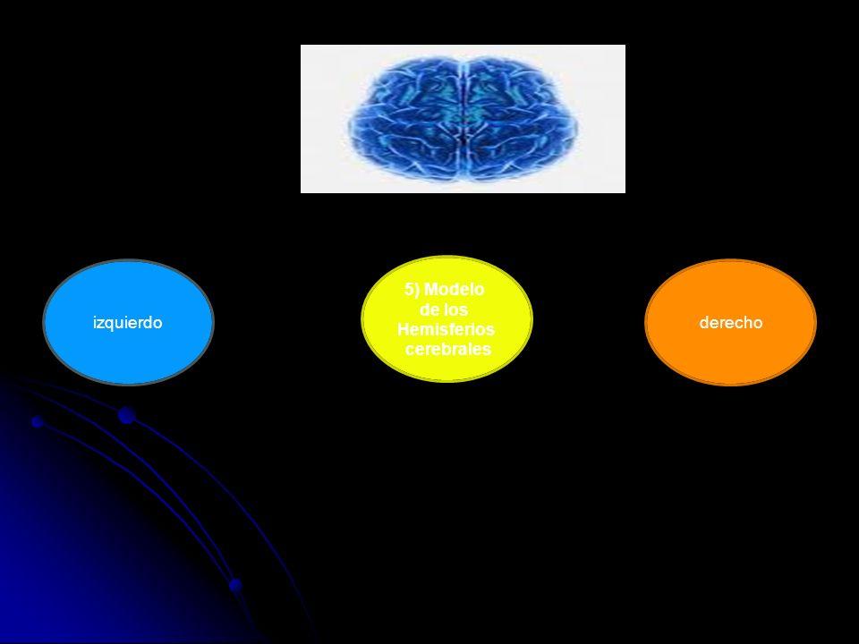 5) Modelo de los Hemisferios cerebrales derechoizquierdo