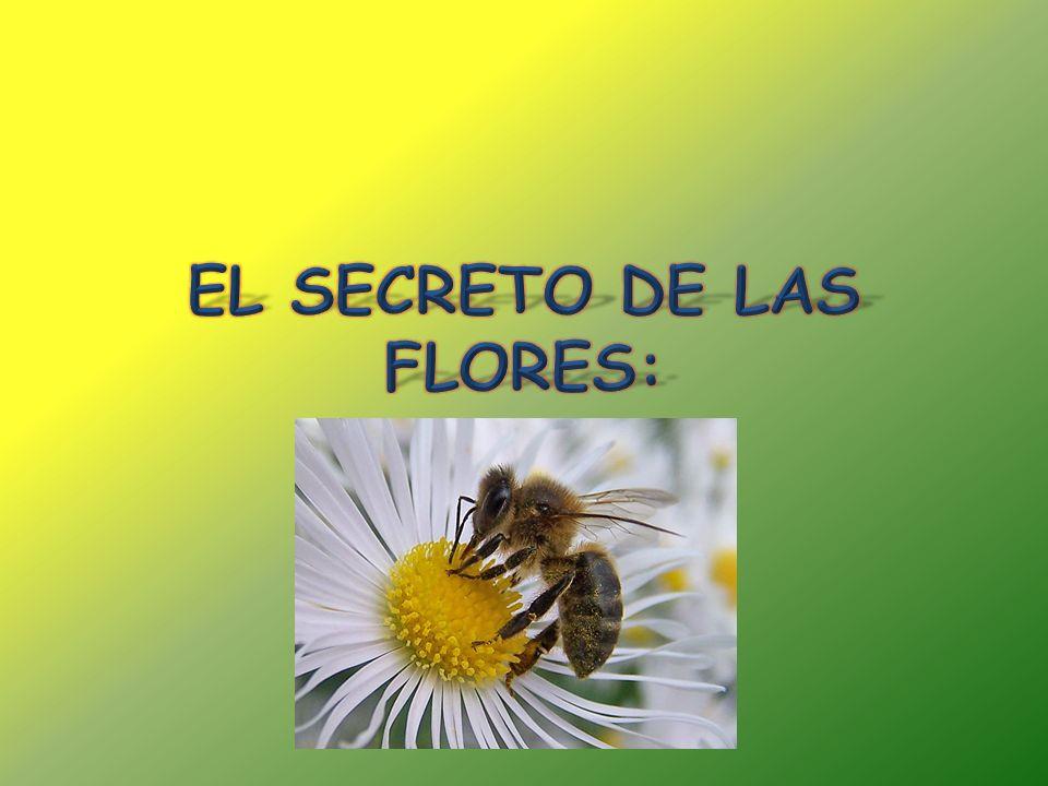 Se hizo la elección de este tema, La flora apícola, ya que nos parece un tema de gran interés y con el que los niños se pueden divertir y aprender nuevos conceptos a la vez.