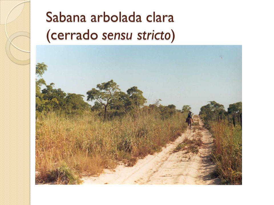 Sabana arbolada clara (cerrado sensu stricto)