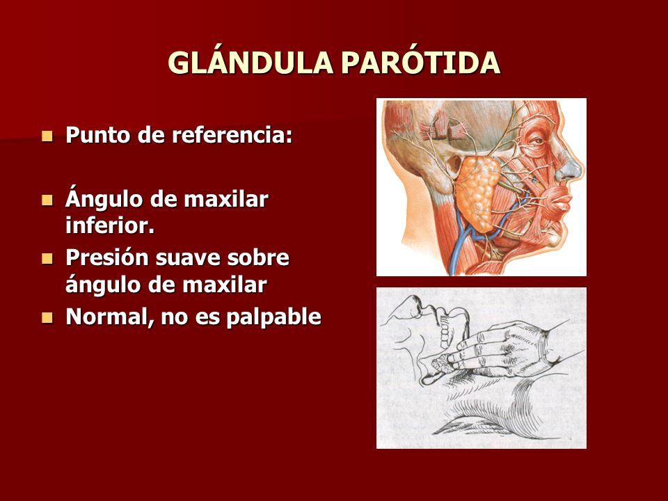 GLÁNDULA PARÓTIDA Punto de referencia: Punto de referencia: Ángulo de maxilar inferior. Ángulo de maxilar inferior. Presión suave sobre ángulo de maxi