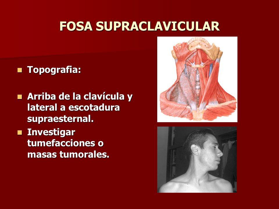 FOSA SUPRACLAVICULAR Topografia: Topografia: Arriba de la clavícula y lateral a escotadura supraesternal. Arriba de la clavícula y lateral a escotadur
