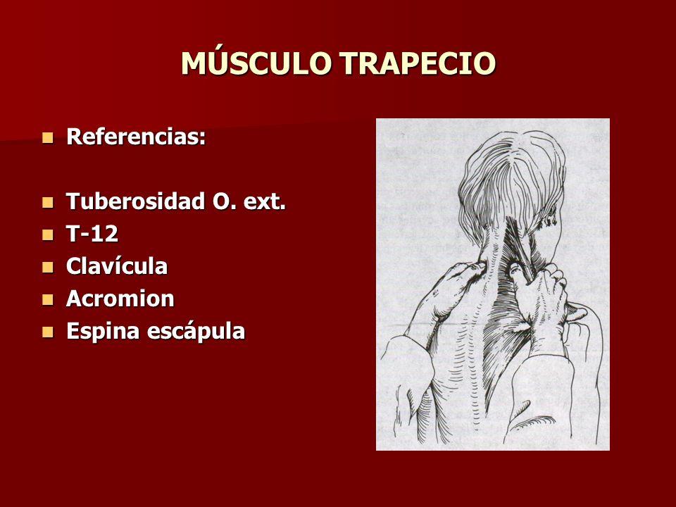 MÚSCULO TRAPECIO Referencias: Referencias: Tuberosidad O. ext. Tuberosidad O. ext. T-12 T-12 Clavícula Clavícula Acromion Acromion Espina escápula Esp
