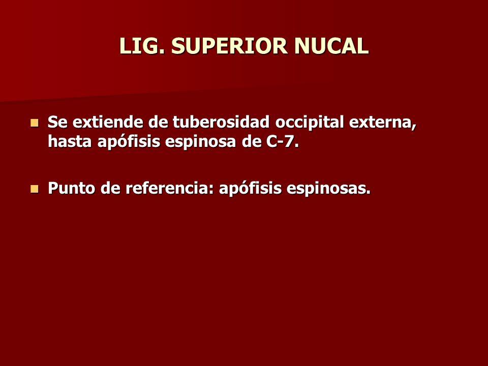 LIG. SUPERIOR NUCAL Se extiende de tuberosidad occipital externa, hasta apófisis espinosa de C-7. Se extiende de tuberosidad occipital externa, hasta