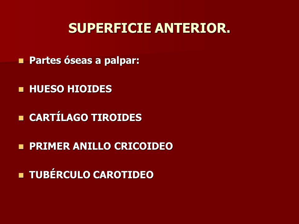 SUPERFICIE ANTERIOR. Partes óseas a palpar: Partes óseas a palpar: HUESO HIOIDES HUESO HIOIDES CARTÍLAGO TIROIDES CARTÍLAGO TIROIDES PRIMER ANILLO CRI