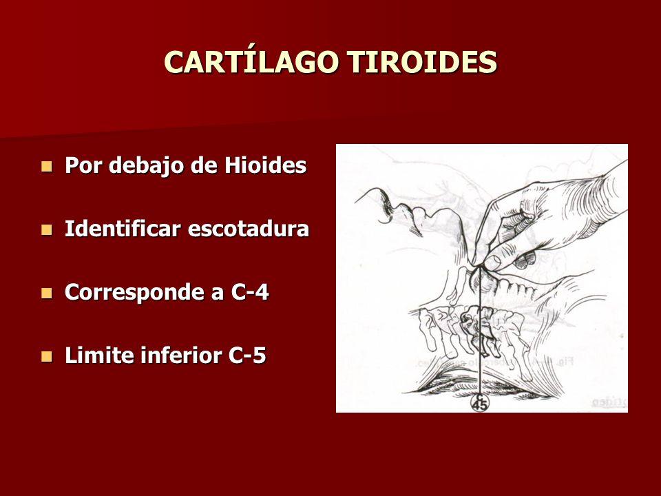 CARTÍLAGO TIROIDES Por debajo de Hioides Por debajo de Hioides Identificar escotadura Identificar escotadura Corresponde a C-4 Corresponde a C-4 Limit